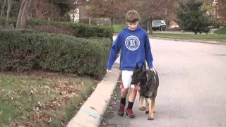 Global K9 Protection: Merrill Family and Aron