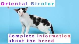 Oriental Bicolor. Pros and Cons, Price, How to choose, Facts, Care, History