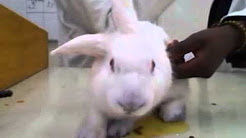 effect ofpilocarpine and atropine in a rabbit