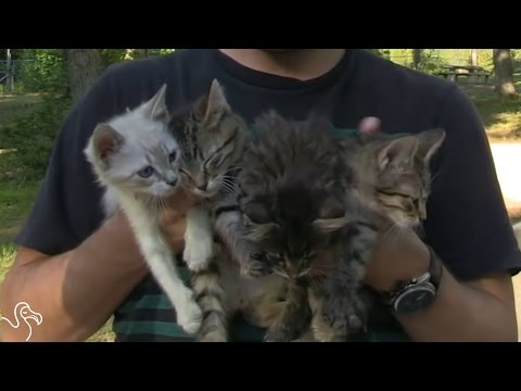 Hikers Rescue Four Tiny Kitten