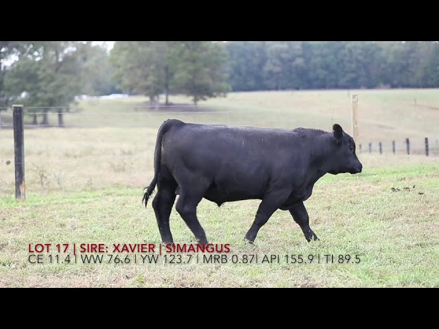 Edgewood Angus Lot 17