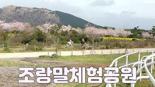 [제주도가이드] 서귀포시 표선면 녹산로와 조랑말체험공원…