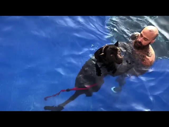Babo cartel de santa en la piscina Un chapuzón
