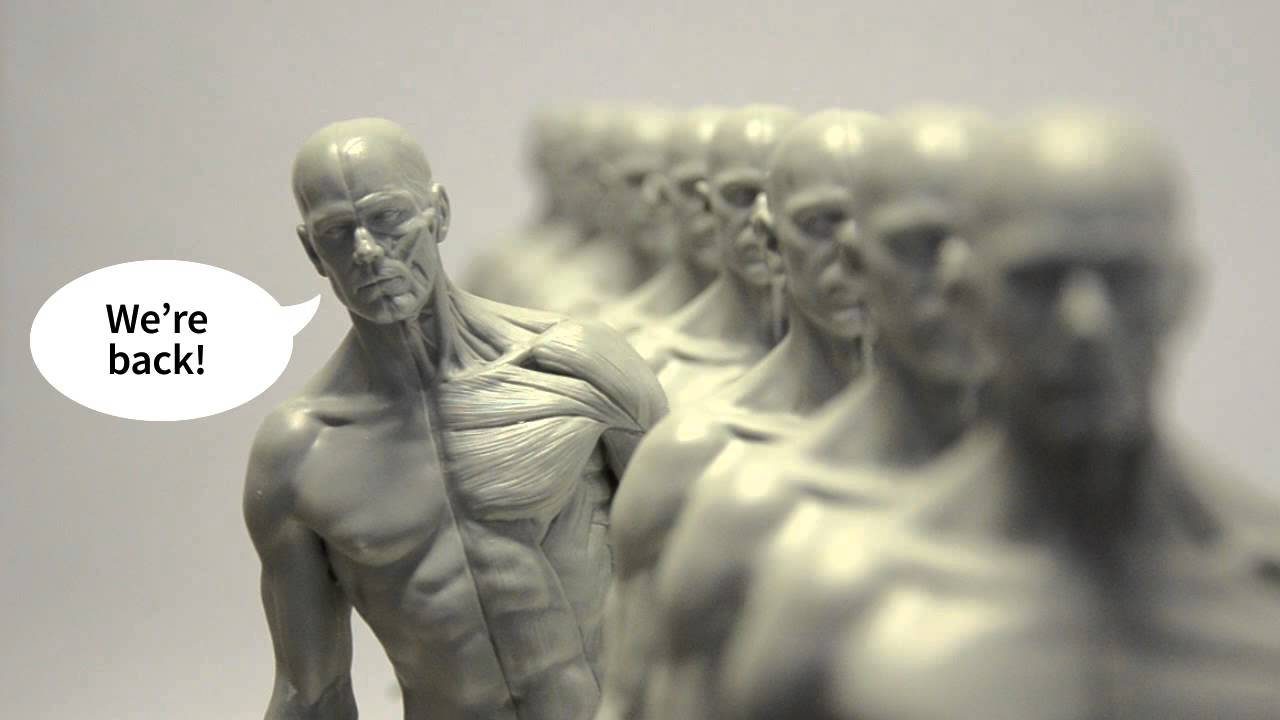 Back In Stock 3dtotal Anatomy Figure Youtube