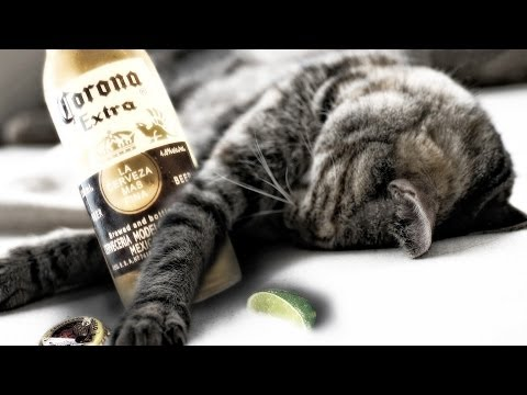 drink-non-alcoholic-beer-for-better-sleep