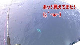第八健栄丸さんで初めての電動ジギングにチャレンジしました。 一定のス...