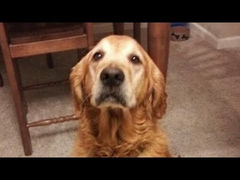 Dogs Doesn't Like Singing Compilation