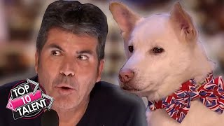 Download TOP 10 SMARTEST DOG Auditions On Britain And America's Got Talent!