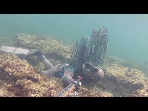 Pikotech Posidonia CRYPTIK - Camouflage - Tarnung - Spearfishing
