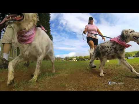 PBS Hawaii - HIKI N? Episode 712 | Hawaii Preparatory Academy | BK Fun Run