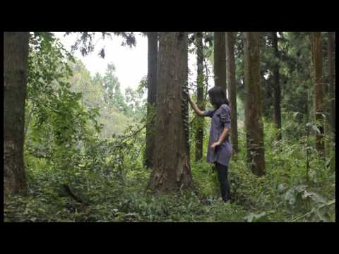 Dance in the forest