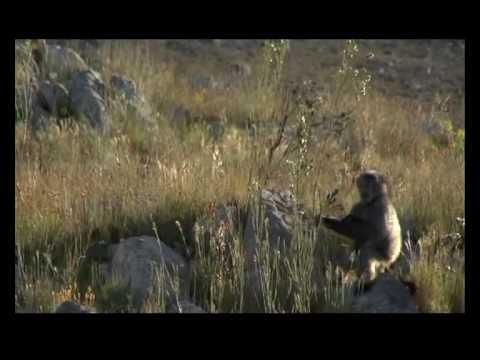 Storyteller:  The Swartberg Pass, Eco Tourism and the Klein Karoo beyond the 90 minutes