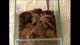 Животные в своей и съемной квартире