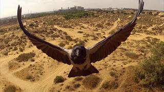 Repeat youtube video quadcopter, Raven Attacks תקיפת עורבים