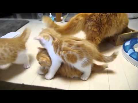 Very Cute Kitten Cute Kittens Doing Funny Things