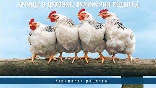 Курица в духовке. Кулинария рецепты