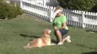 Golden Retriever Belle Is Learning Canine Freestyle
