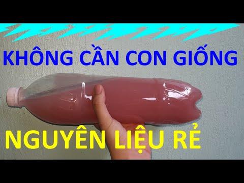[154] Tự làm vi khuẩn PSB giúp trong sạch nước hồ cá tại nhà