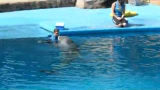 uShaka Marine World Dolphin Show