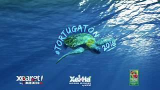 🐢 DOCUMENTAL #TORTUGATÓN 2018 🐢   Xcaret México! Cancún Eco Park