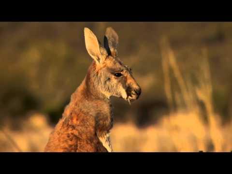 Julie McAllan - Lord of Hosts Official Music Video - Australian Christian Country Music Artist