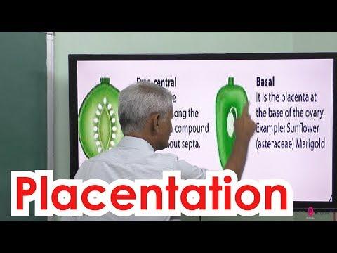 42.Botany | Reproductive Morphology | Placentation