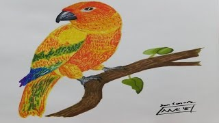 Live Art Replay: Parrot: Sun Conure