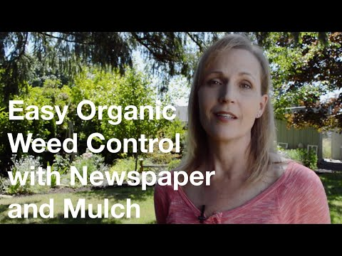 Easy Organic Weed Control With Newspaper & Mulch - AnOregonCottage.com