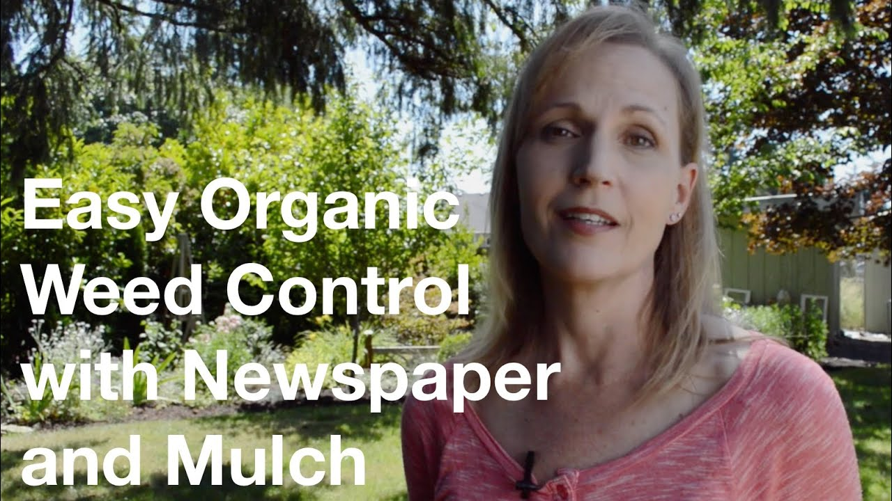 Easy organic weed control with newspaper mulch - Weed killer safe for vegetable garden ...