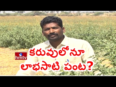 Success Story Of Farmer Gajendra Reddy | Ashwagandha Cultivation | Nela Talli | HMTV