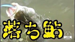 リバーシーバス秋の落ち鮎 imaサスケ105イワシカラーがきく! 楽曲提供...