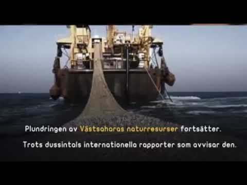 Sweden and the plunder of Western Sahara