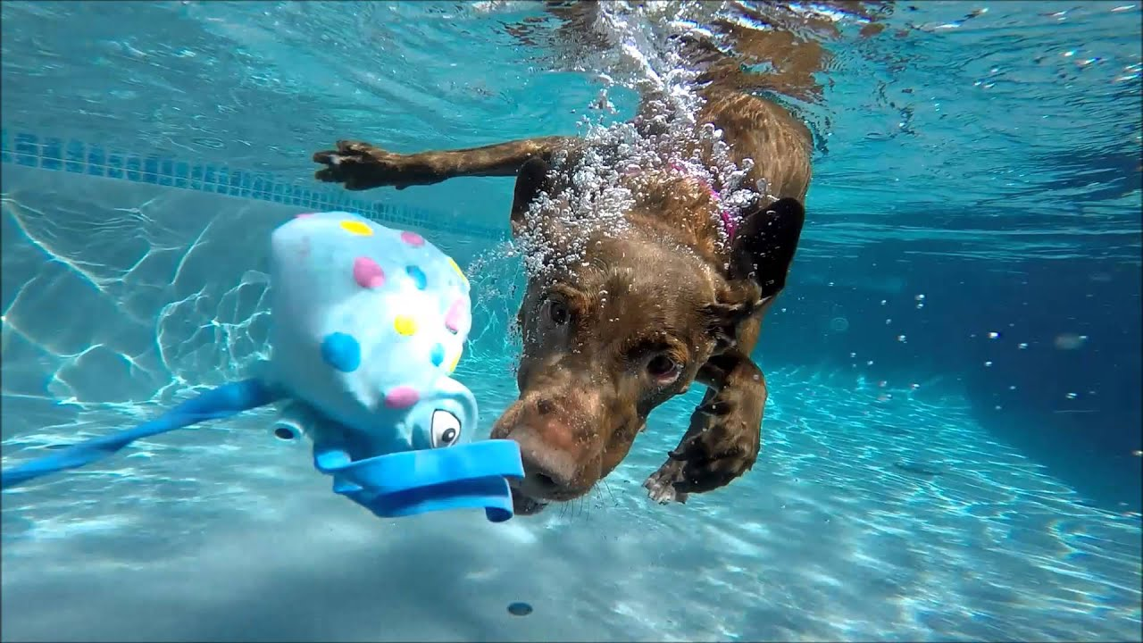 Toy Dog That Swims In Water