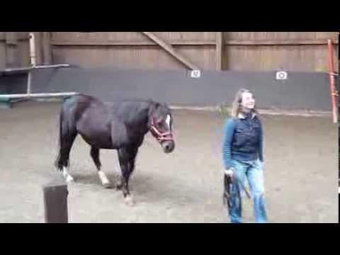 Pferd läuft Sabine hinterher