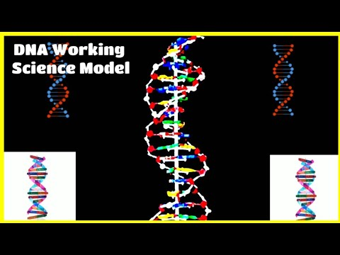 Science exhibition model and project in biology - DNA working model