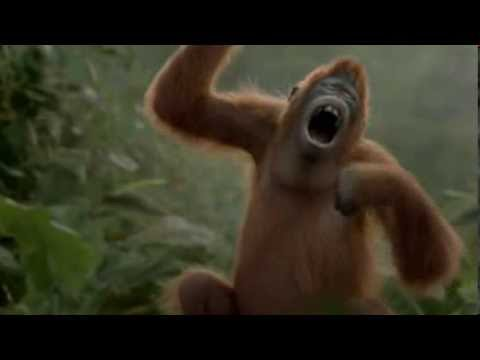 Топ-10: животные с самыми сильными укусами