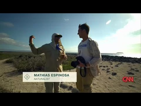 The Wonder List Series 1 2of8 Galapagos A Fight for Survival