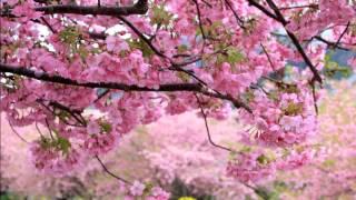高井麻巳子 - 木洩れ陽のシーズン