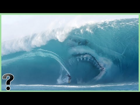 What If Megalodon Sharks Didn&39;t Go Extinct?