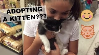 ADOPTING A KITTEN VLOG // DAY IN THE LIFE