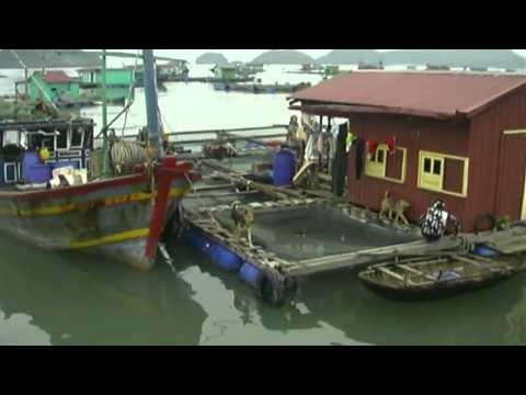 Ha Long Bay Vietnam Travel Video Guide