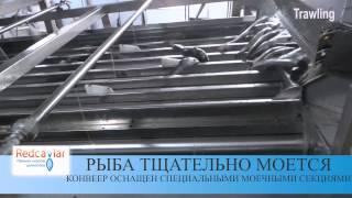 Добыча рыбы в Баренцевом море. Процесс производства свежемороженой рыбы.(Интернет магазин http://shop.RedCaviar.ru - у нас Вы всегда найдете, только качественные морепродукты по Выгодным цена..., 2015-03-25T15:20:55.000Z)