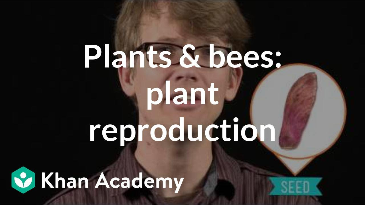 The plants & the bees: Plant reproduction | Crash Course biology | Khan Academy