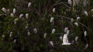 Egrets roost near Women's Detention Center in Miami's inner city