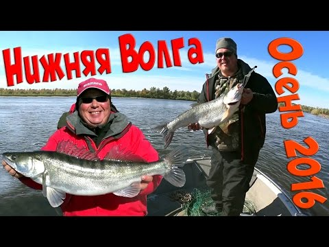 видео ловля белой рыбы на нижней волге