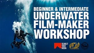 Beginner and Intermediate Underwater Film-Making Workshop with David Diley and Oonas Divers