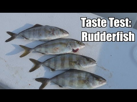 TRASH FISH CATCH & COOK: What About Banded Rudderfish?