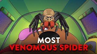 O Que Aconteceria Se Você Fosse Picado Pela Aranha Mais Venenosa Do Mundo?
