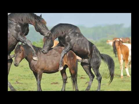 Mating of different animals - YouTube