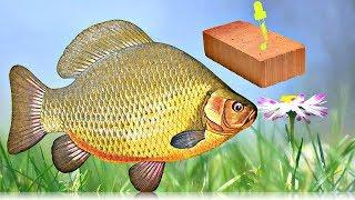 Старые рыбацкие секреты на карася весной и летом которые работают как часы